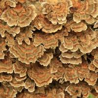 Tree Lichen beauty Art Prints & Posters by Paul Everett