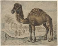 Dromedary in an Eastern Landscape with a City, Mae