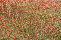 Passchendaele Flanders Fields Poppies