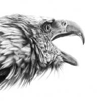 Screaming Eagle Art Prints & Posters by Peter Williams