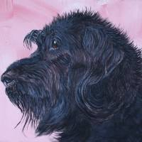Black Labradoodle Art Prints & Posters by Yvonne Carter