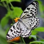 TropicalButterflies gallery