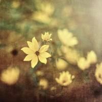 """""""Fairy Tale Meadow"""" by George_Oze"""
