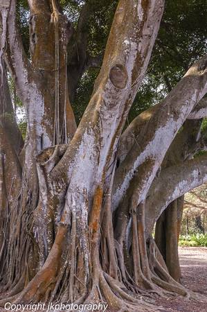 Under the Banyan Trees