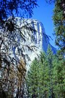 Rockface, Yosemite by Priscilla Turner