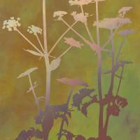 """""""Illuminated Hog Weed"""" by CoraNiele"""