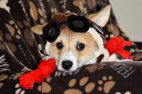 Red Baron Corgi