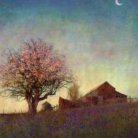 barn on hill with apple tree by r christopher vest