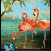 florida flamingoes by r christopher vest