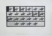 Galloping, Eadweard Muybridge, 1887