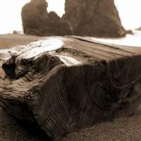 Goat Rock Sonoma Coast Driftwood 071 by Richard Thomas