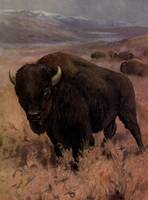 Vintage American Buffalo Painting (1909)