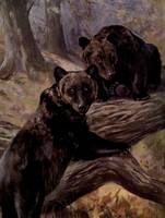 Vintage Brown Bear Painting (1909)