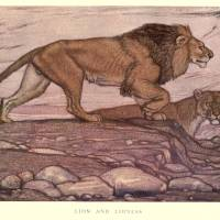 Vintage Lion Painting (1909) Art Prints & Posters by Alleycatshirts @Zazzle