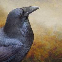 raven close fairly sharp2 by r christopher vest