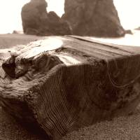 Goat Rock Sonoma Coast 071 sepia by Richard Thomas