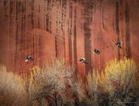 sandstone wall at capitol reef with magpies
