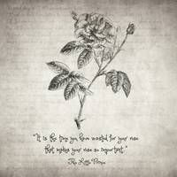The Little Prince Rose Quote