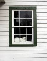 White Kitty Cat Napping in the Window Catnap