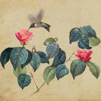 Hummingbird and Japanese Camillea-IMG by I.M. Spadecaller