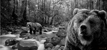 Bear Mountain Stream B+W