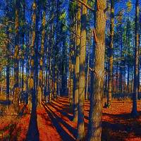 Pine Grove Crystal Lake Illinois Art Prints & Posters by Tom Jelen