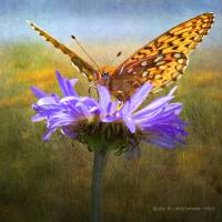 yellow orange butterfly on flower by r christopher vest