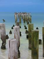 Pelicans and Posts-Four