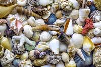 Tropical Beach Seashell Treasures 1529B