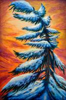 Pine tree winter portrait
