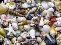 Tropical Beach Seashell Treasures 1500A