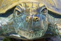 Sea Turtle Statue Gulf Shores AL 1590a