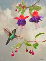 Fuchsia and Hummingbird