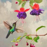 Fuchsia and Hummingbird by I.M. Spadecaller
