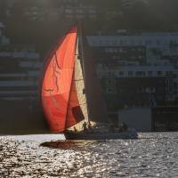 Red Sails on Lake Union Art Prints & Posters by Betty Sederquist