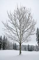 Lone Snow Covered Tree by Kirt Tisdale