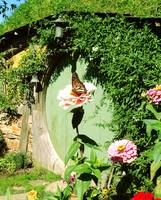 Hobbit Home Butterfly