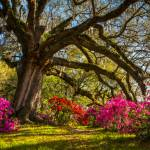 Charleston SC Spring Flowers Landscape Carolina Prints & Posters