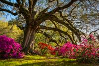 Charleston SC Spring Flowers Landscape Carolina