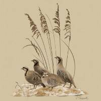 Chukar Partridges Art Prints & Posters by I.M. Spadecaller