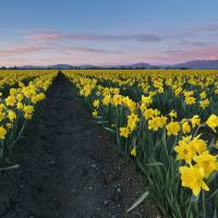 Skagit Valley Sunset Art Prints & Posters by Mike Dawson