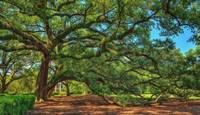 Oak Alley / Live Oak Tree / Painterly Effect / WS