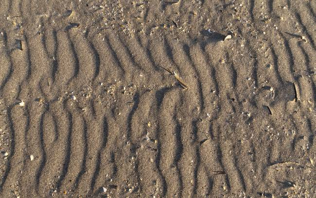 Pattern of Wind Driven Sand