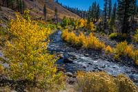 Fall Color Along the Carson River