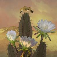 Night Blooming Cereus by I.M. Spadecaller