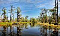 LOUISIANA BAYOU / HDR / Paint Effect