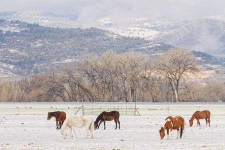 Beautiful Horses Geese and Snow