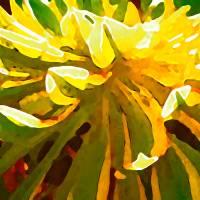 SunburstSucculentonBlue2432 Art Prints & Posters by Amy Vangsgard