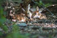 Twin Fawns Grooming