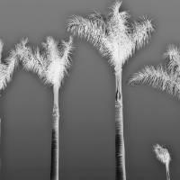 Negative Palms by Through The Split Window